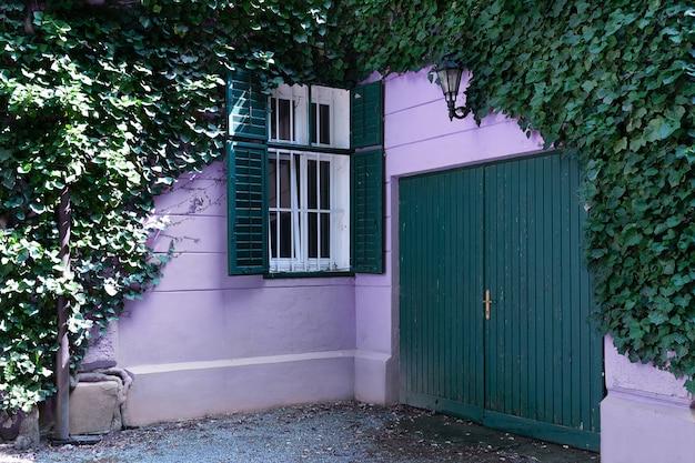 Vista da casa lilás que é envolvida em uvas selvagens.