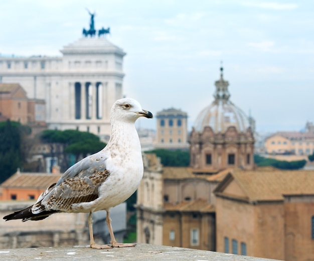 Vista da cidade de roma do monte palatino, itália. concentre-se no pássaro na frente.
