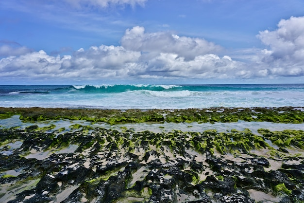 Vista da costa cheia de algas verdes de anse bazarka na ilha de mahé, seychelles.