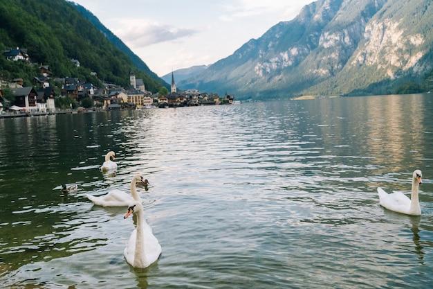 Vista da famosa aldeia de montanha resort alpes nos alpes austríacos na área de salzkammergut na bela luz no verão. cisnes no lago