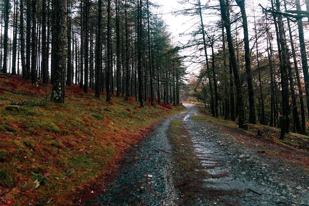 Vista da floresta basca com as cores do outono no parque natural aiako harriak