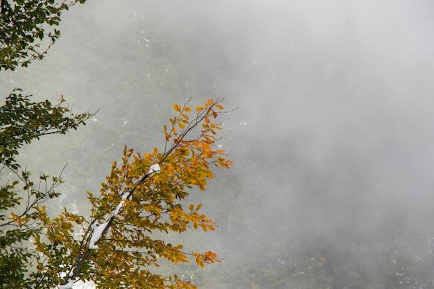 Vista da floresta com neblina e neblina