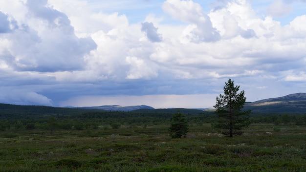 Vista da floresta de tundra do norte nas colinas da península de kola