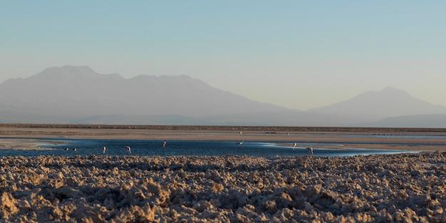 Vista da lagoa chaxa, reserva nacional los flamencos, san pedro de atacama, província de el loa, antofag