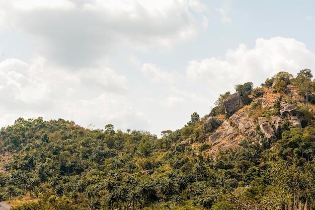Vista da natureza africana com vegetação e montanha