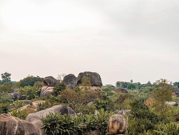 Vista da natureza africana com vegetação
