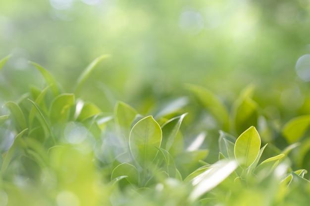 Vista da natureza da folha verde no jardim no verão sob a luz solar