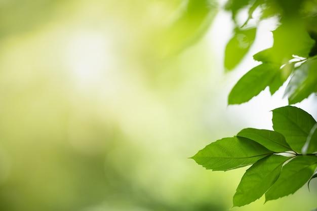 Vista da natureza de folha verde com fundo verde desfocado