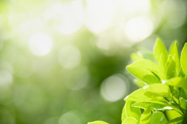 Vista da natureza de folha verde com gota de chuva no fundo desfocado da vegetação