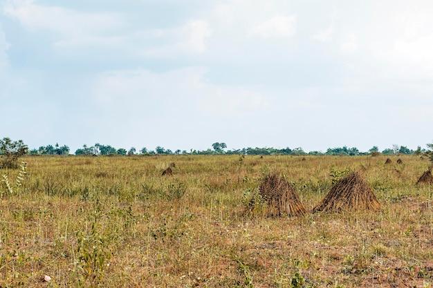 Vista da paisagem africana com vegetação