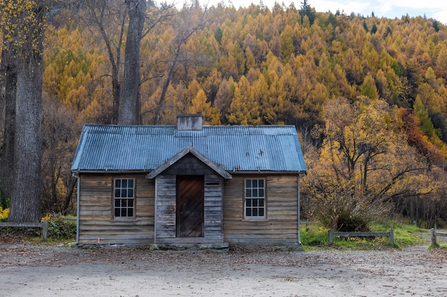 Vista da paisagem de uma cabana na floresta no outono na nova zelândia.