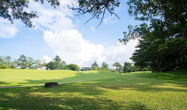 Vista da paisagem do jardim ao ar livre e verde no sol de verão