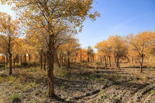 Vista da paisagem do outono