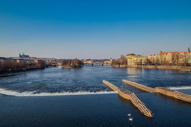Vista da ponte para o rio moldava e a ponte da ilha de praga e patos nadam