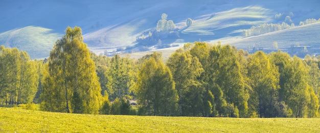 Vista da primavera, floresta na encosta de uma montanha ao amanhecer