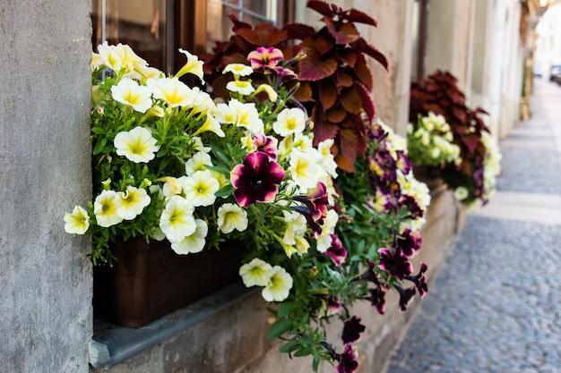 Vista da rua e da casa, na janela de que há caixas de flores de petúnia.