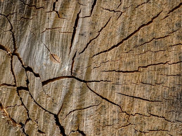 Vista da superfície da face final de uma tora de bétula pontilhada com teias de aranha de rachaduras