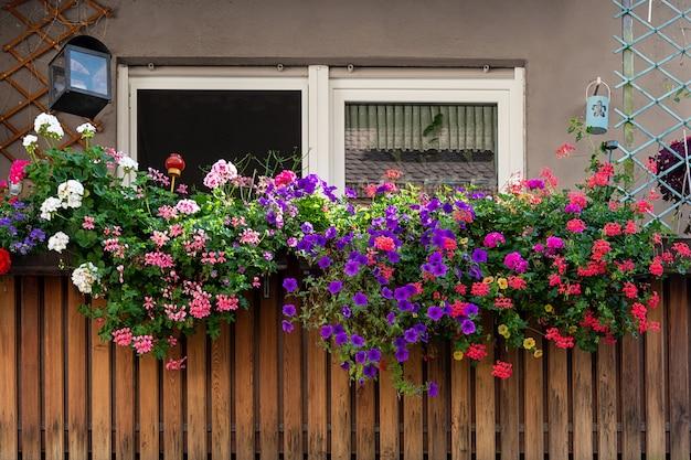 Vista da varanda decorada com gerânios lindos multicoloridos.