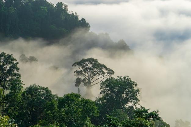 Vista das árvores cobertas pela névoa no distrito de aiyoweng, tailândia do sul.