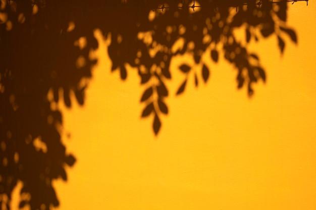Vista das folhas com sombras da luz do dia