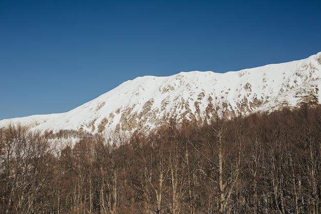 Vista das montanhas rochosas nevadas com árvores no dia ensolarado.