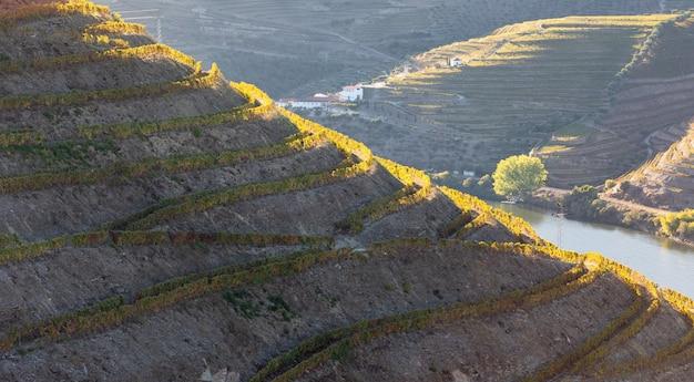 Vista das vinhas do vale do douro com núcleos de outono - portugal.