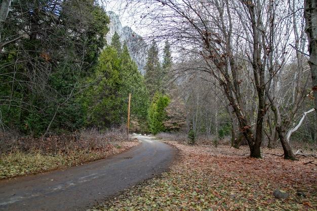 Vista, de, a, caminho caminhada, em, parque nacional yosemite, em, a, inverno, estação