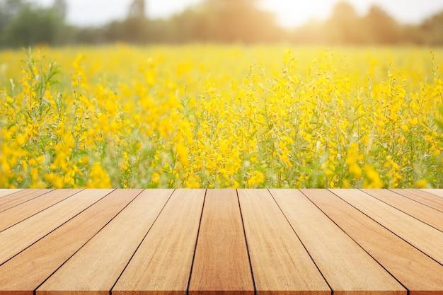 Vista, de, amarela, sunn, campo cânhamo, ou, crotalaria, juncea, em, campo