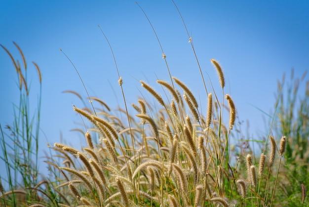 Vista de ângulo baixo de plantas frescas de palea contra o céu azul