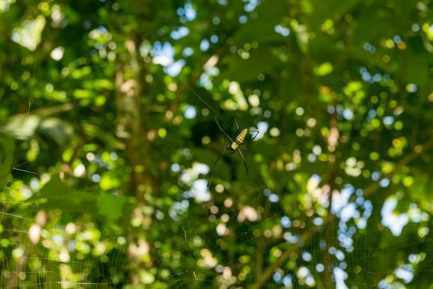 Vista de aranhas na floresta de macacos sagrado em ubud