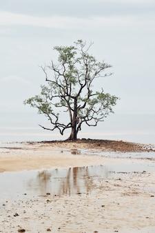 Vista, de, árvore sozinha, em, a, lago