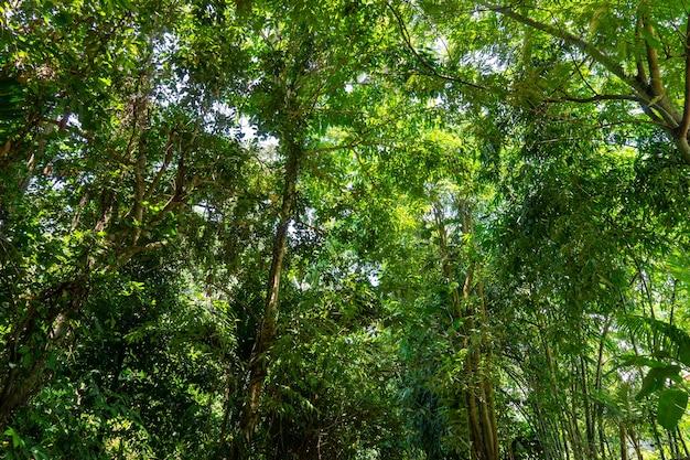 Vista, de, árvores, e, verde sai, em, a, floresta tropical, com, céu azul, e, brilhante, sol, un, m