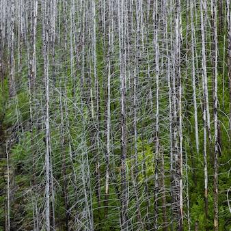 Vista, de, árvores, em, um, floresta, parque nacional geleira, geleira, município, montana, eua