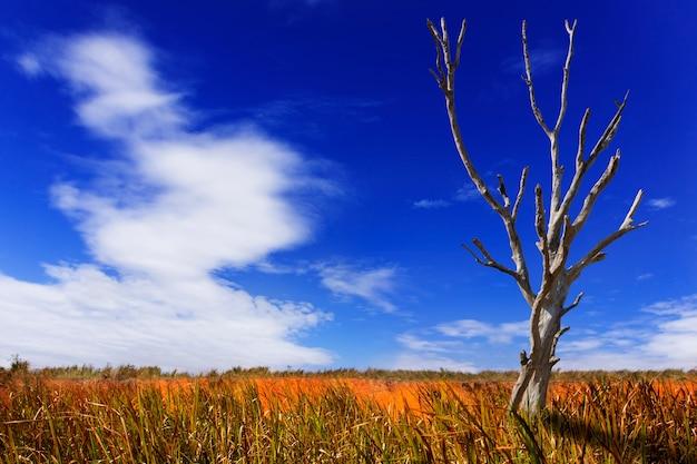 Vista de árvores mortas na atmosfera de verão.