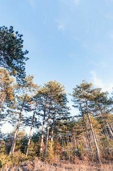Vista de baixo ângulo de belas árvores