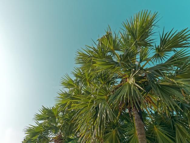 Vista de baixo ângulo de palmeiras contra o céu azul