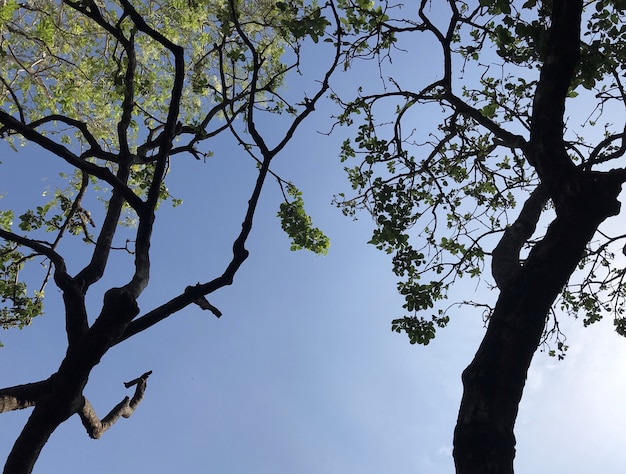 Vista de baixo anjo da bela paisagem da grande árvore