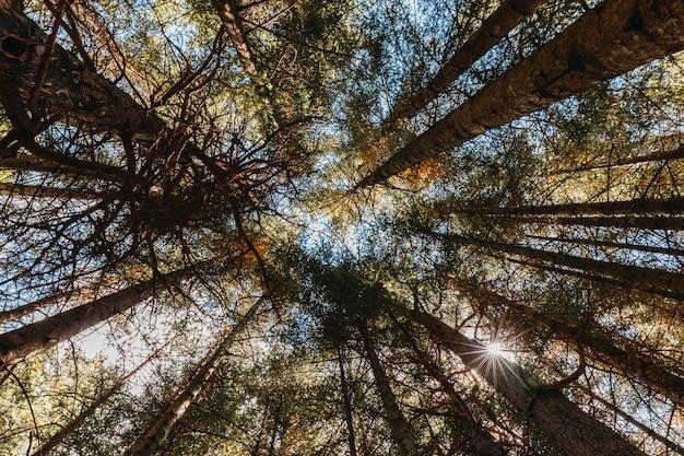Vista de baixo das árvores em uma floresta