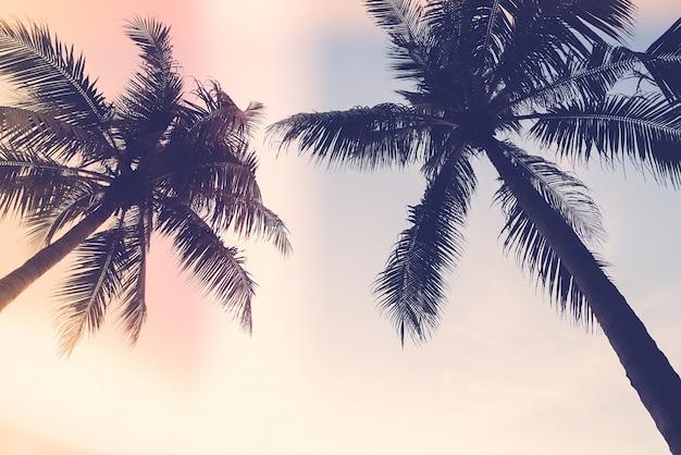 Vista de baixo de palmeiras escuras