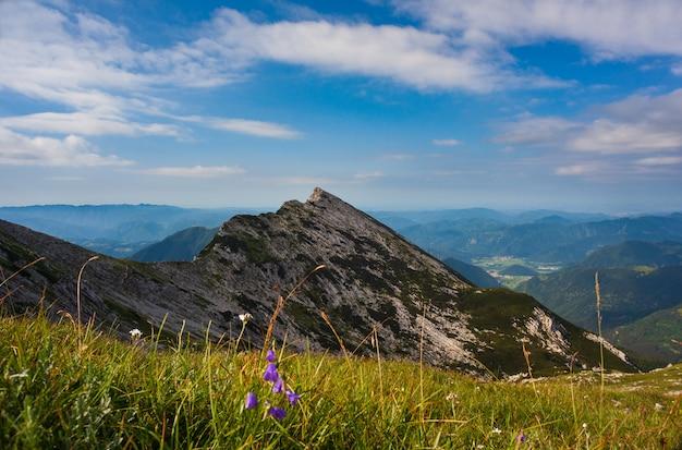 Vista de campânula no fundo da montanha vogel