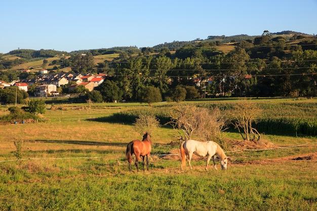 Vista, de, cavalos, em, campo