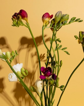 Vista de cima com flores desabrochando