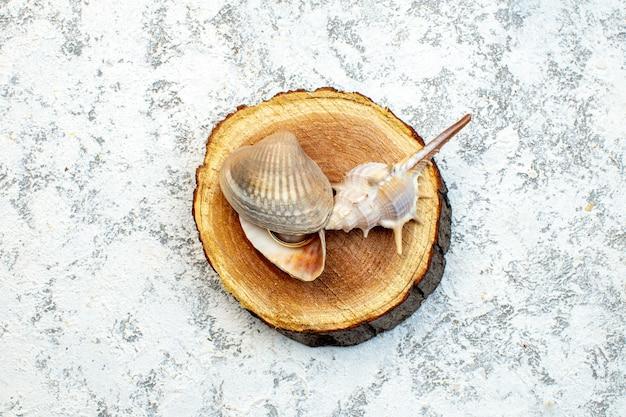 Vista de cima conchas do mar no corte fundo branco de madeira concha peixes água oceano cor do projeto