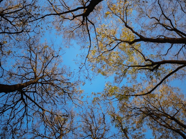 Vista de cima das árvores de outono no céu azul em um dia ensolarado