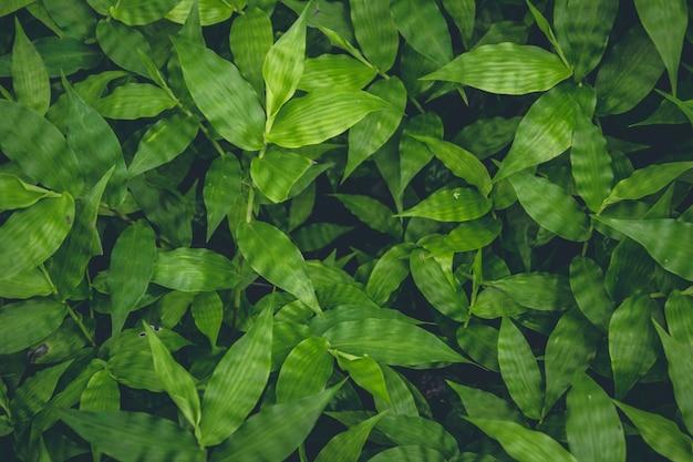 Vista de cima das plantas verdes crescendo fundo