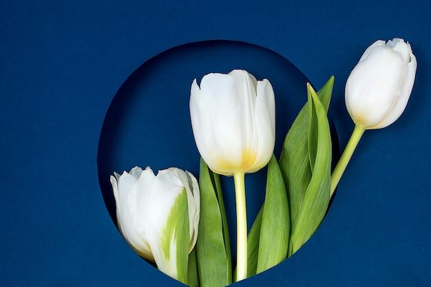 Vista de cima de tulipas e caixa de presente com espaço de cópia. plano de fundo para o dia das mulheres, 8 de março dia dos namorados, 14 de fevereiro.