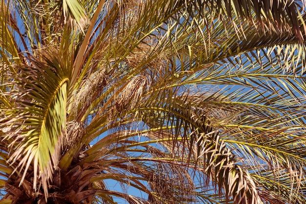 Vista de cima de uma palmeira tropical