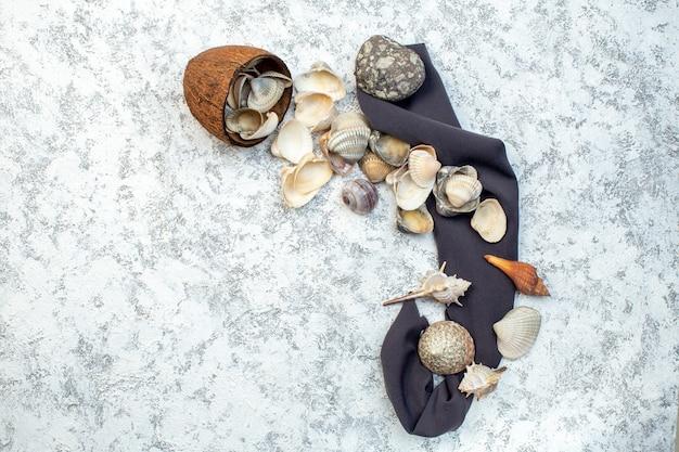 Vista de cima diferentes conchas com pedras no fundo branco marisco água oceano design cor
