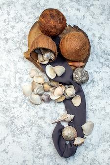 Vista de cima diferentes conchas com pedras no fundo branco.
