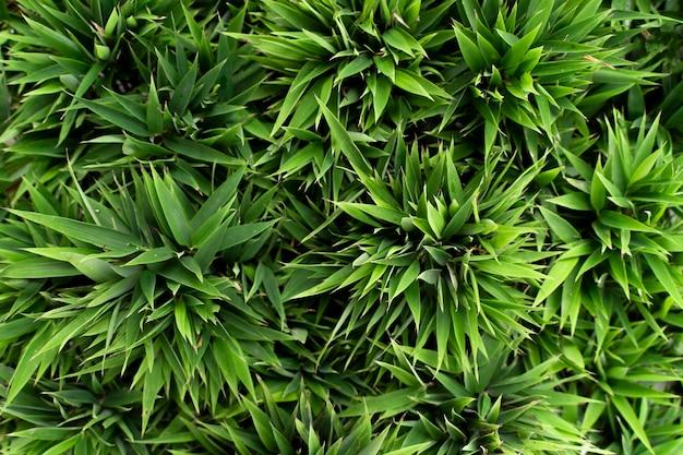 Vista de cima em tamanho cheio folhas de bambu